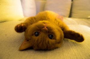 Cat Behavior Explained: 6 Common Cat Postures ...