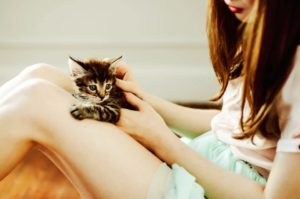 How to bond with a new cat? Pet and stroke your cat