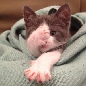 Tips for a healthy cat: Do not allow your cat to come into contact with feces from any other animals.