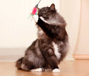 The top 5 cat toys