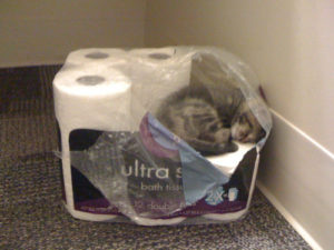 Cat litter box problems and solutions