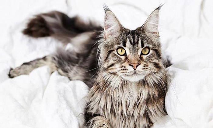 Cat Behavior Explained: 6 Common Cat Postures