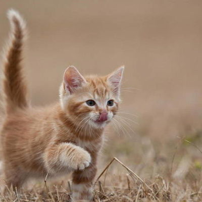 Cat Tail: Understanding Cat Body Language