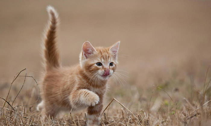 Cat Tail: Understanding Cat Body Language