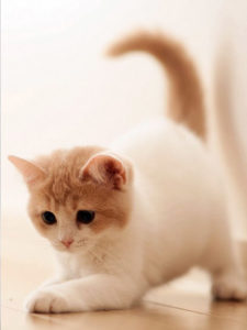 Cat tail meaning