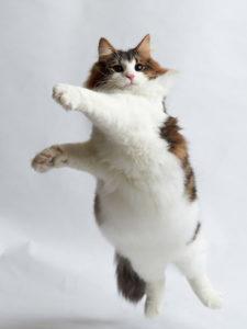 Is your cat happy? Jonas Jurgella, author of the Cat Language Bible, believes so.