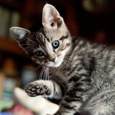 20 Interesting Cat Facts - Part 3