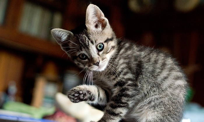 20 Interesting Cat Facts - Part 3