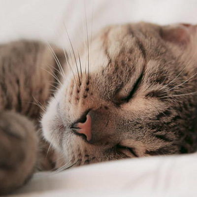 12 Cat Sounds and Their Meaning