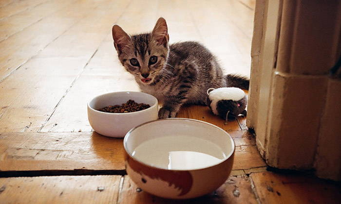 How to Put Your Cat on a Diet With the Best Cat Food