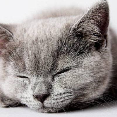 Why Do Cats Purr - Is a purring Cat a Happy Cat?