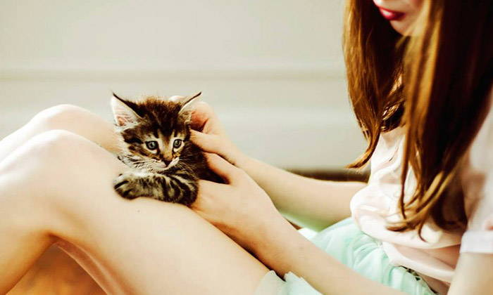 New Study About Cat Language - Best Way for Owner and Cat to Bond