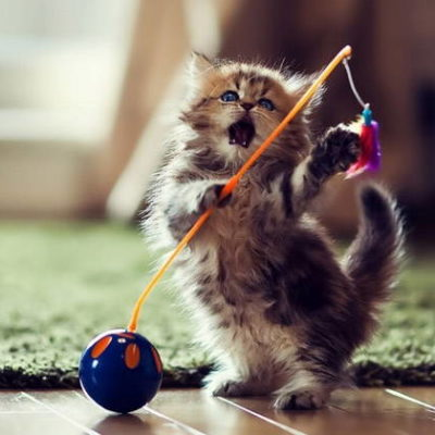 The 25 Best Cat Toys your Cat will love!