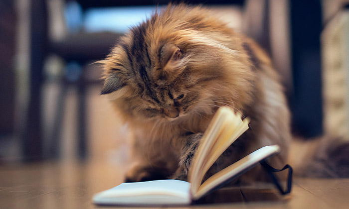 The Cat Language Bible - Review and Insights