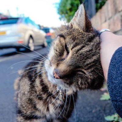 Meow & Purr: How to Speak Cat Language