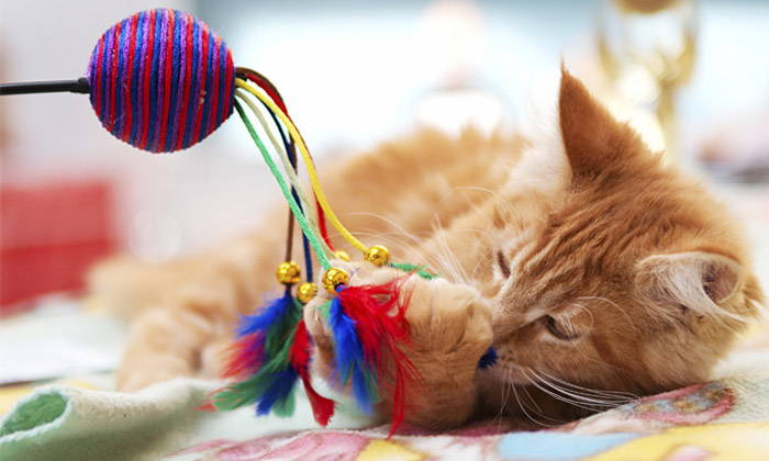 Top 5 Cat Toys 2017 - How to Make Your Cat Happy