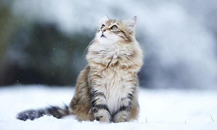 20 Interesting Cat Facts