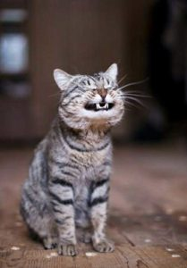 Cat Teeth: Important tips on cat dental care