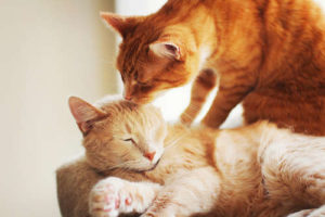 How to start with cat grooming