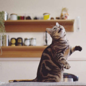 Stop your cat from scratching your furniture