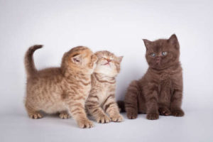 Pregnant cat mothers should have welcomed their first kitten