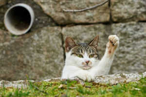 Cats use their cat paws to communicate.