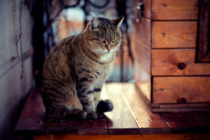 Is your cat spraying inside your home?