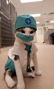 Cat Veterinarian