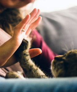 Casual Rubs with cat paws