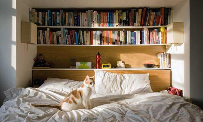 Cat Behavior after Moving