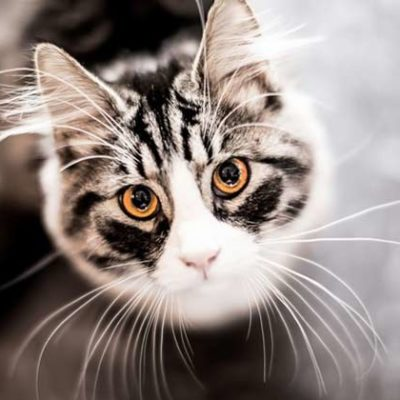Cat Ears explained
