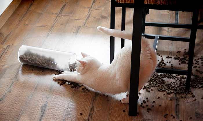 Cat Poop Behavior