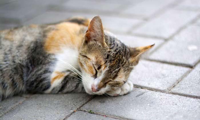 Cat Behavior changes after vet visit
