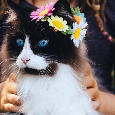 Ragdoll Cat Personality and Behavior