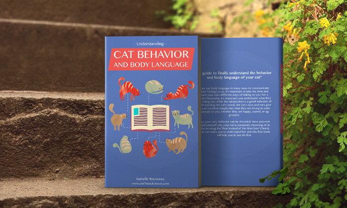 Free Ebook: Understanding Cat Behavior and Body Language