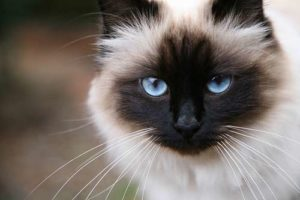 Cat whiskers correspond to the width of a cat