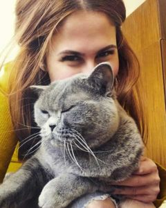 British Shorthair Cat Behavior Explained