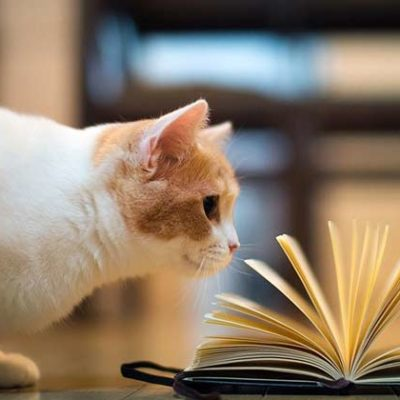 Cat Spraying No More Book Review