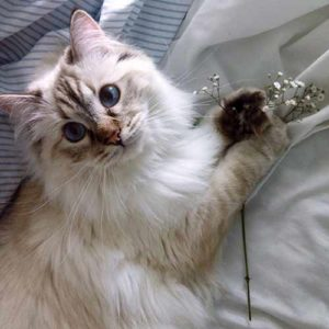 Like humans, there are many possible causes of breathing problems in cats, which can be located throughout the lungs, the heart, or the pulmonary system.