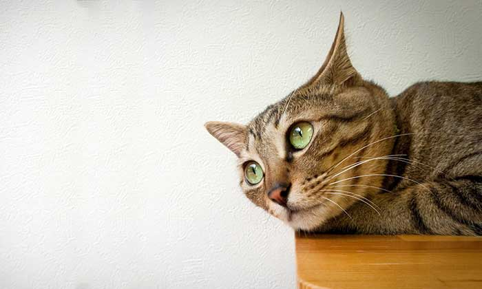 The complete guide to cat eyes and their meaning