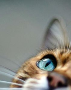 While a cat's pupils dilate or constrict based on how they're feeling, they may simply be reacting to the light.