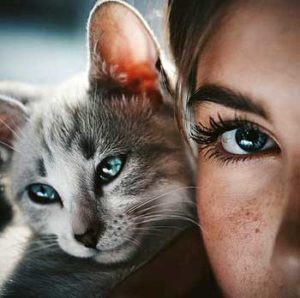 Many cats will even return a blink kiss with their cat eyes, while others become self-conscious and react by nonchalantly grooming or fleeing.
