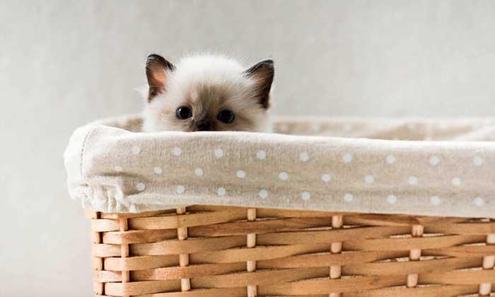 Eliminate Cat Urine Odor