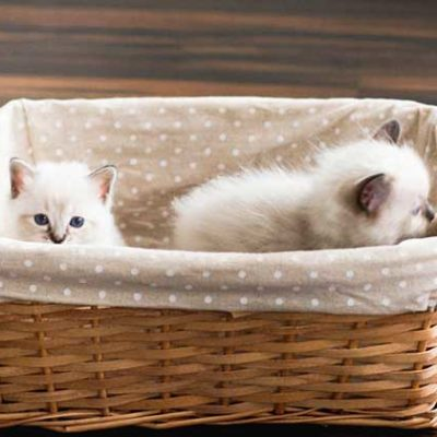 Cat Toilet Training - How to handle problems with your cat's toilet behavior