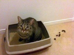 Often you cat doesn't like the type of cat litter box you bought them.