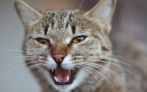 Interpreting the mouth of a cat rests of noticing different signs