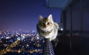 Outdoor cats have a life expectancy of just 2 to 5 years.
