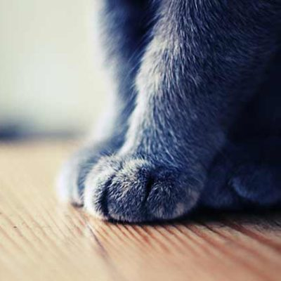 10 interesting facts about cat paws