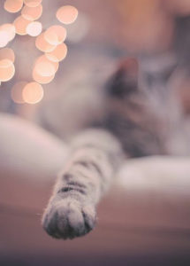 Just like humans, studies have shown that cats can have a dominant front paw.
