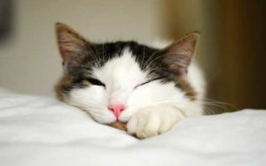 Pregnant cat: Managing Pregnant Cat Behavior